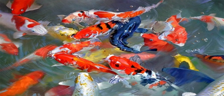 Зимовка рыб