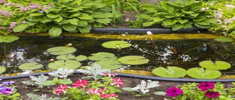 Высадка лилии