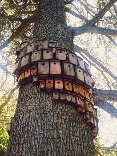 Скворечники на дереве